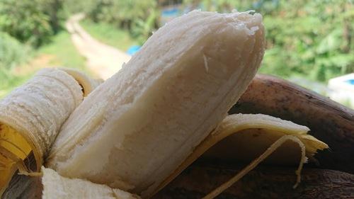 野菜用バナナ